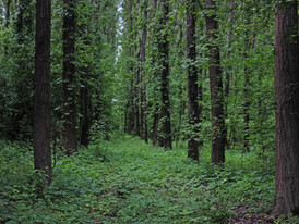 Pósteleki-erdő