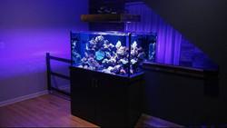 planet-custom-aquarium-08