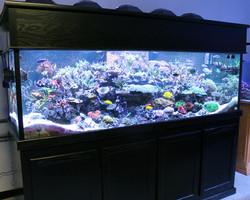 Fish2morrrow Display.jpg