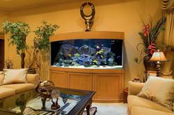 planet-custom-aquarium-26