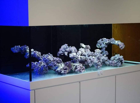 Impressive aquascape in our mega maxtrix tank