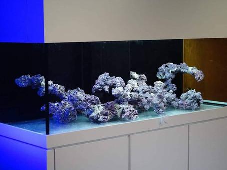 Impressive aquascape in our mega maxtrix tank