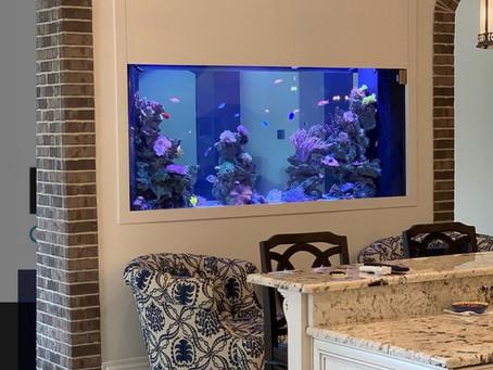 gorgeous custom install - nice work Aquarium quest (FL)!