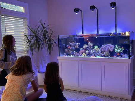 Those who reef together stay together