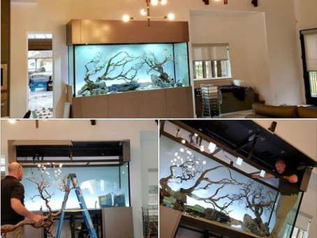 ADG Turns our aquariums in to works of art