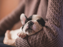 Un debate de la vacunación en perros