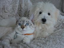 Cómo y cuándo desparasitar a mi perro o gato