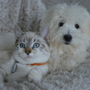 How and When to Deworm My Dog or Cat