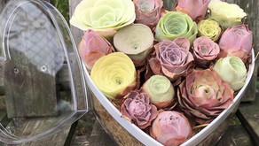 Care Instructions for Greenovia (Mountain Rose)