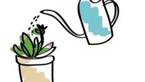 How Often to Water Succulents in Winter