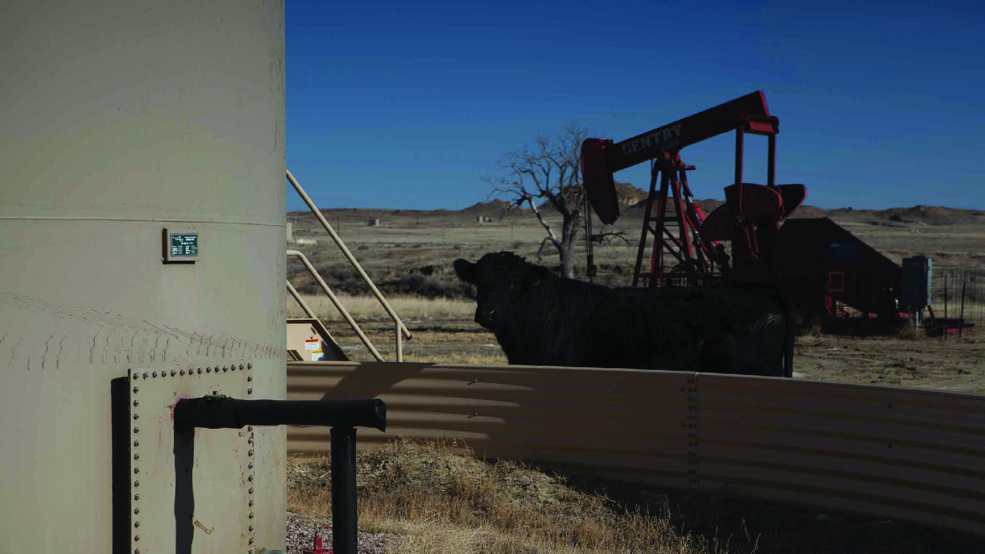 cow rig-02