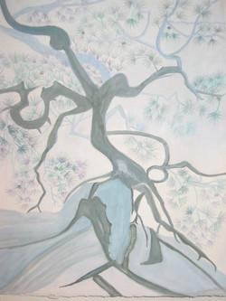 Torrey Pines Tree Spirit