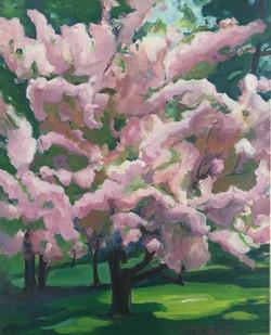 Morse_Spring