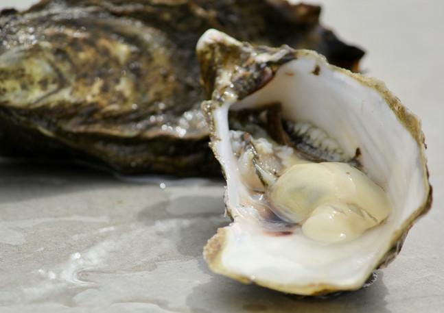Oysters, Freycinet Marine Oyster Farm, Coles Bay, Tasmania, Australia