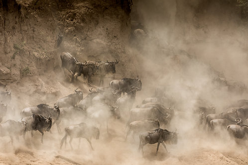 Great Migration 02