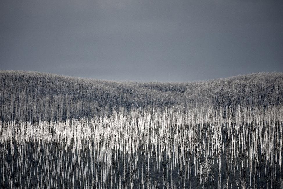 Mountain Ash 03_web.jpg