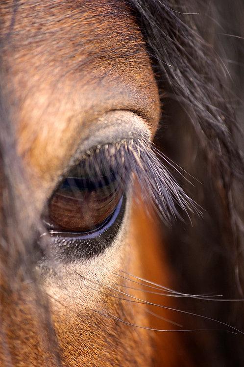 Animal Photography Fine Art Print Horse