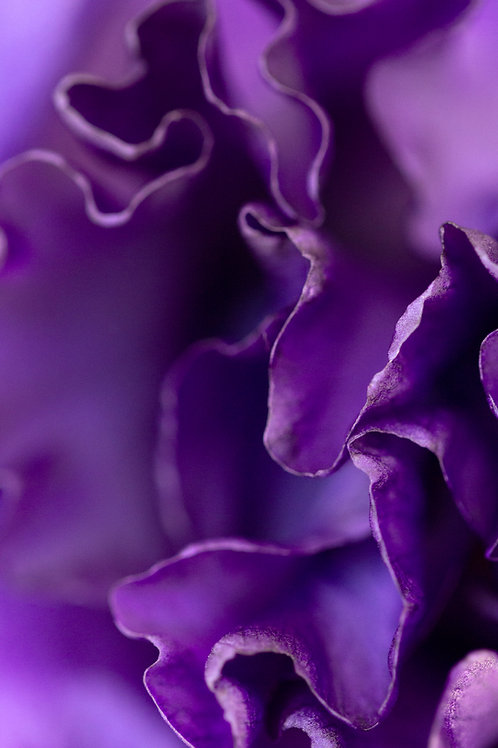Purple, Artwork, Photography, Flower, Flora