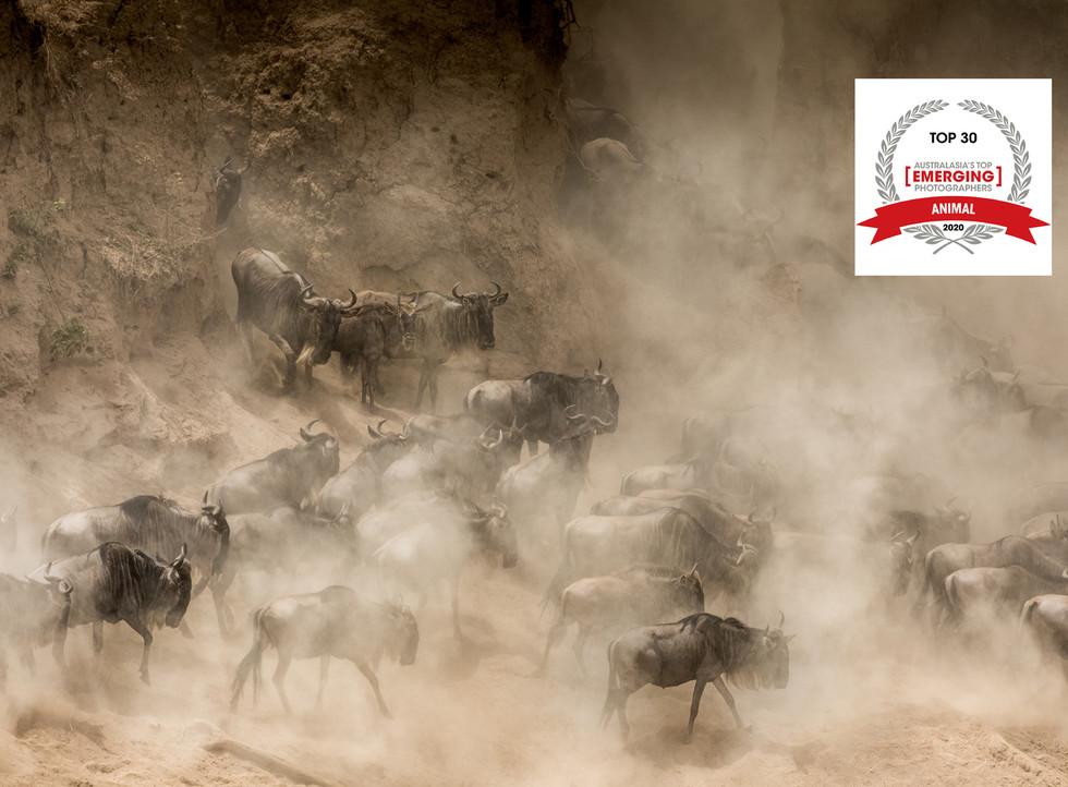 Top 30 - Animal category - The Greatest Wildlife Show on Earth (portfolio)
