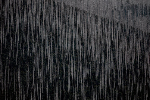 Art, Artwork, Abstract Photography, Landscape, Forest