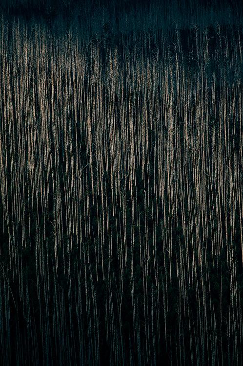 Mountain Ash, Art, Artwork, Photography, Interior Design, Fine Art