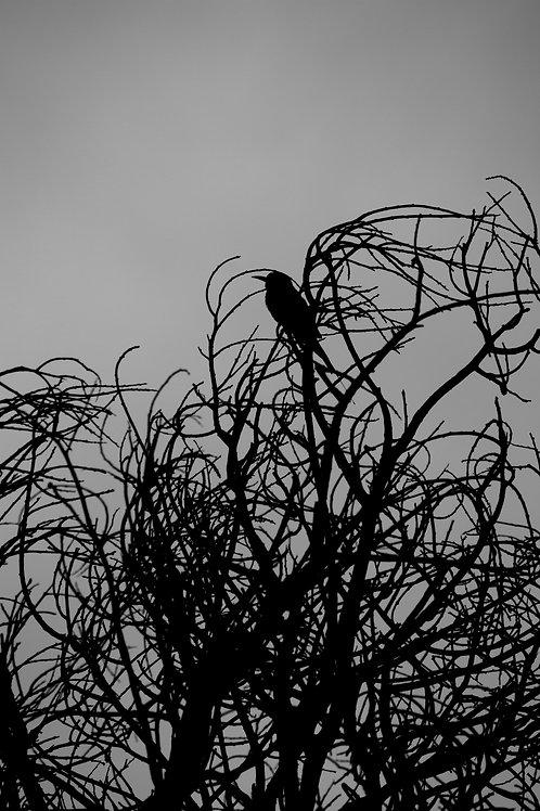 Birds Artwork Black and White Animal Photography Bird Print