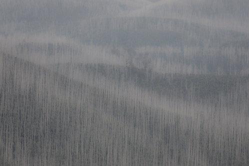 Mountain Ash, Photography, Grey, Artwork