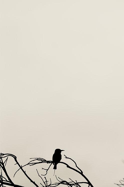 Birdy No. 2