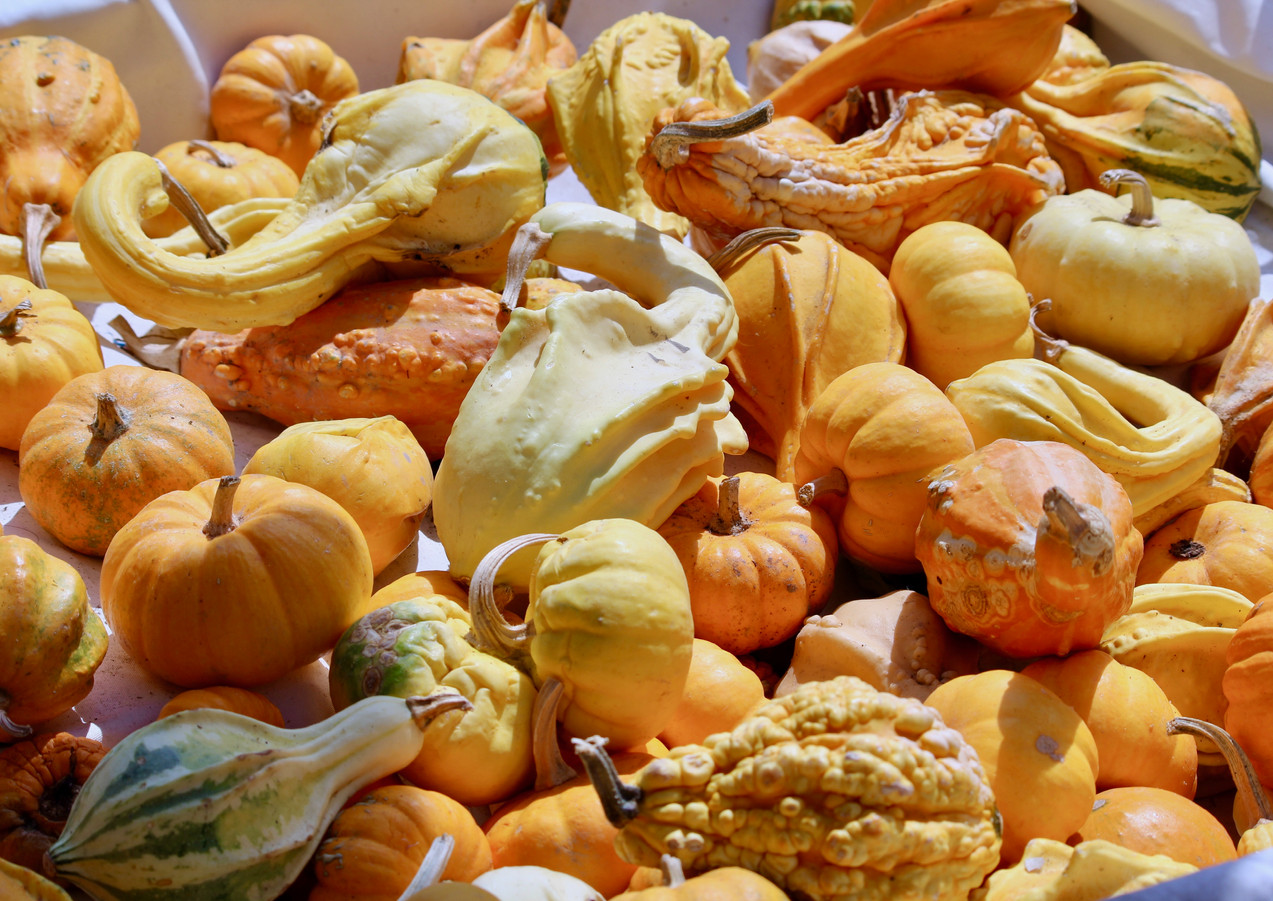 Pumpkins, Isle Sur La Sorge, Provence, France