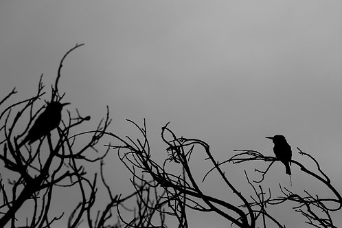 Birds Artwork Black and White Animal Photography Bird Print