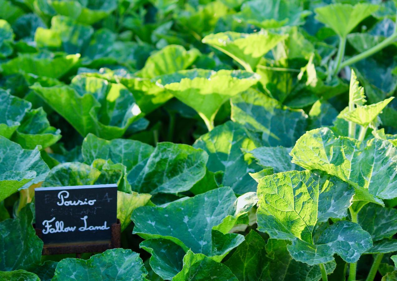 Vegetable garden at Six Senses Douro Valley, Portugal