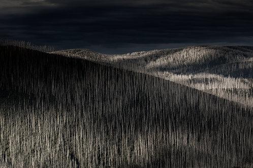 Mountain Ash, Photography, Grey, Black, Monochrome, Artwork