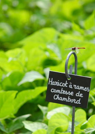 Vegetable garden, Chateau de Massillan, Uchaux, France
