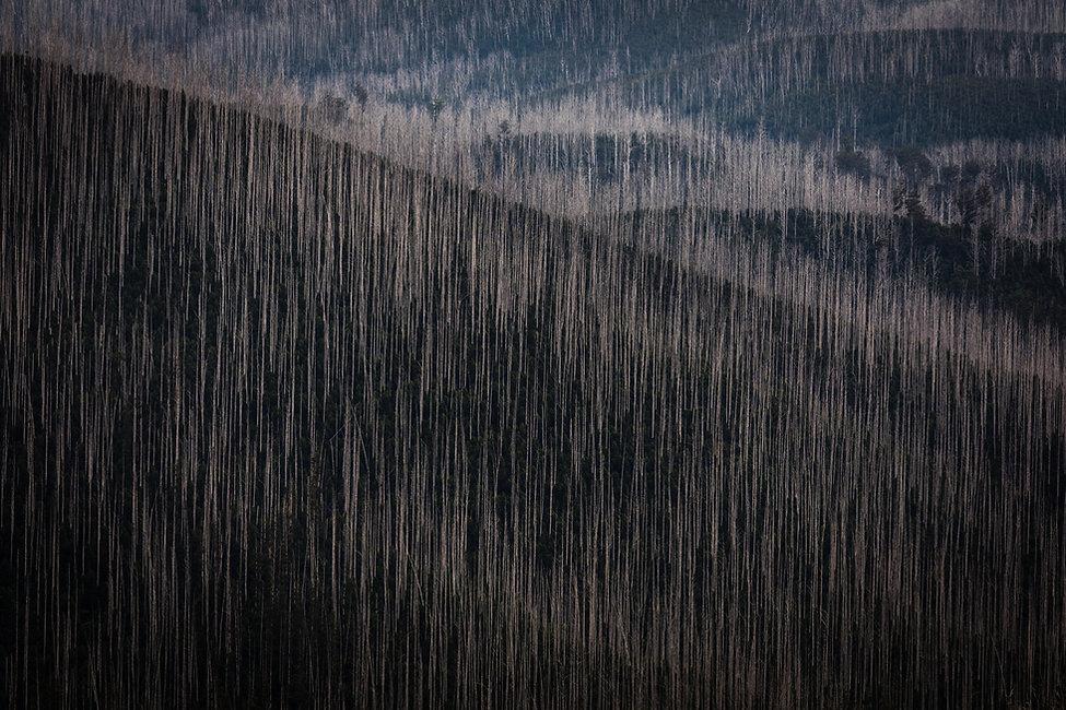 Mountain Ash 01_web-5926.jpg