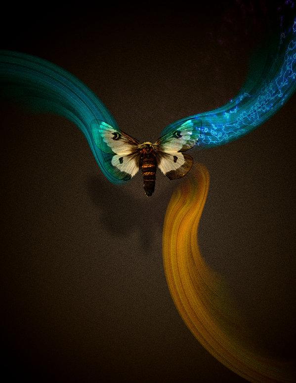 moth flow