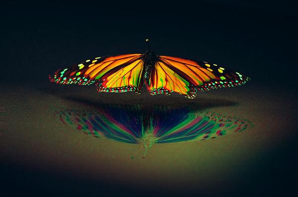 moth, specimen, ucsc