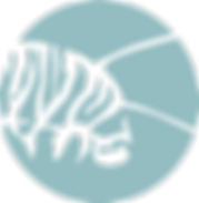 MilkweedConnections_Catepillar.png