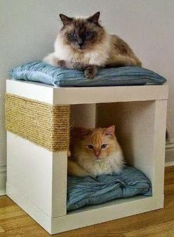 Decoração para pets