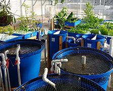 aquaponics-Home-Systems.jpg