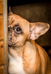 85 Hunde gerettet