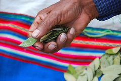 Hand with coca leaf