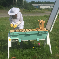 Inspection on Hive