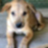 Puppy1-sm.jpg