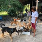 Daeng feeding the dogs