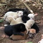 Wild born pups