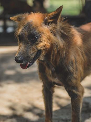 Headrock-dogs-45_Panee.jpg