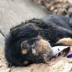 Dog found in a ditch