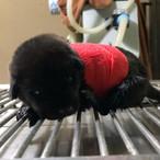 Cass at the vet
