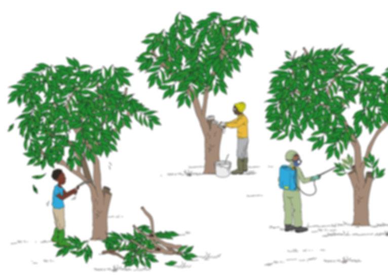 plaisirs minuscules-dessin pédagogique-julie servais-illustratrice-bruxelles-illustration bruxelles-culture du manguier