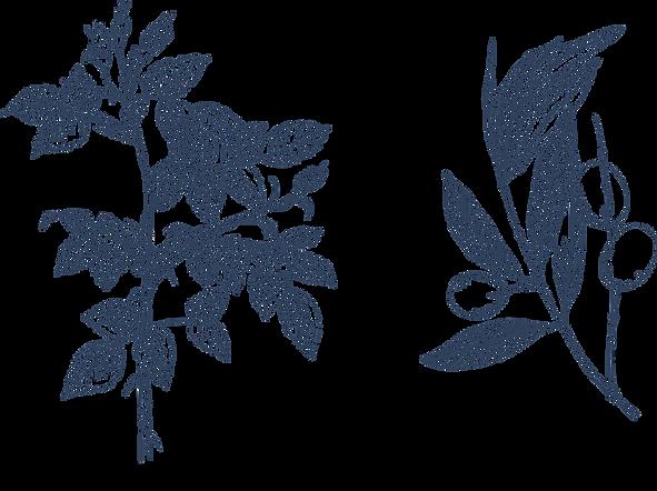 Faire-part-mariage-annonce-julie servais-illustratrice buxelles-botanique-végétal